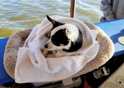 Liki Tiki Cruise Tours Are Pet Friendly